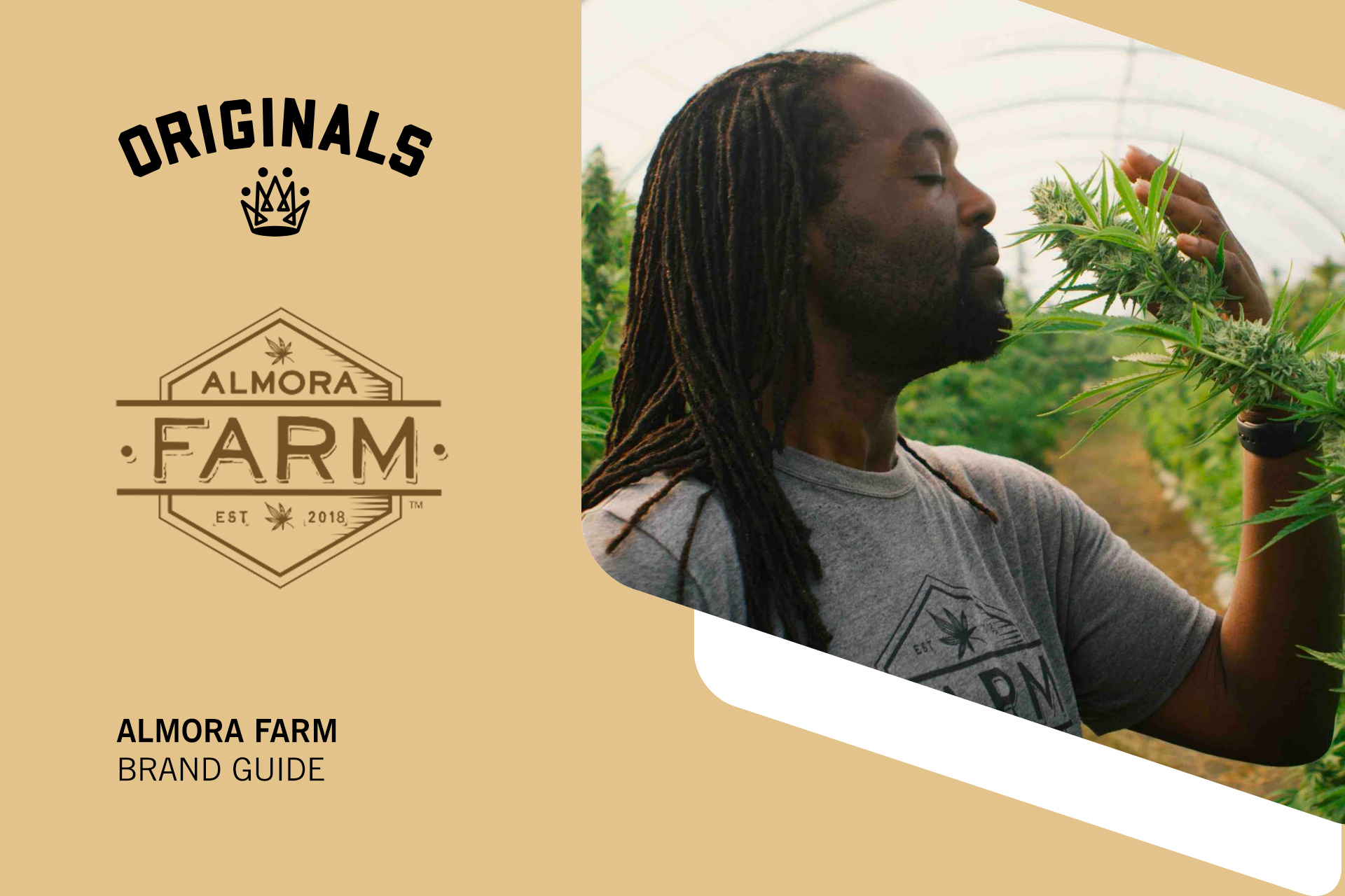Almora Farm Brand Guide: Legacy Seeds and Craft Cannabis Products At Originals
